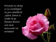 Re: Ganduri si urari de bine Rose, Flowers, Plants, Pink, Plant, Roses, Royal Icing Flowers, Flower, Florals