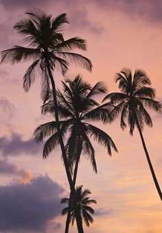 Tropical Sunset | Palms
