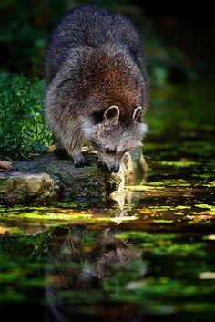 ensphere:    Bin das ich? by Naturfotografie - Stefan Betz on Flickr.