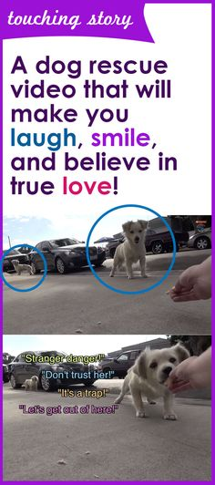 A very happy ending for two doggie best friends. #bbfl #dogs