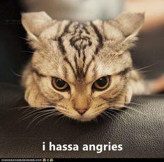 I hassa angries http://cheezburger.com/9093625088