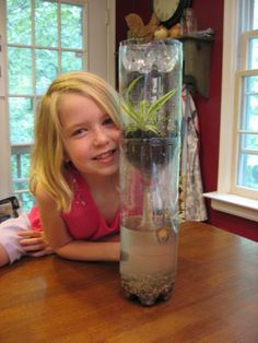 Make an ecosystem in a column of recycled soda bottles – Love this project! 3 clear 2-liter (empty) soda bottles clear packing tape aquarium gravel water dechlorinator rubber band 4″ pi…