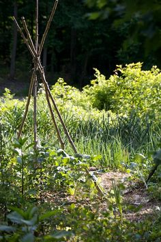 Quote of the Day: Organic Gardening