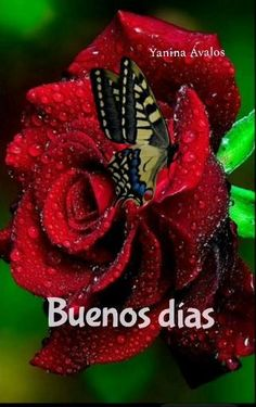 Good Morning In Spanish, Good Morning Happy Sunday, Good Morning Greetings, Good Morning Flowers Quotes, Good Morning Beautiful Quotes, Good Day Wishes, Night Wishes, Love You Images, Beautiful Flowers Pictures