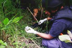 CTI se incauta de detonadores explosivos en zona rural de Santa Rosa de Cabal Risaralda