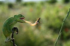 by mehmet karaca -- National Geographic Your Shot