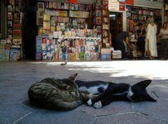 ✔ (Recommended - a lot of cats!) Sahaflar Çarşısı / Old Book Bazaar, c.15th century — Istanbul #usedbooks #bookstores