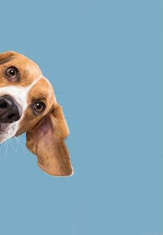 Dog Wallpaper, Animal Wallpaper, Baby Animals, Funny Animals, Cute Animals, Pet Spa, Dog Best Friend, Dog Paintings, Cute Animal Pictures