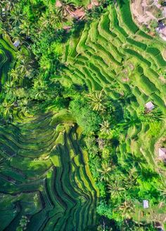 rice terraces of Bali from the sky.. https://www.dynnexdrones.com/.