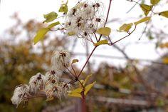 2. осенью прогулки с фотоаппаратом