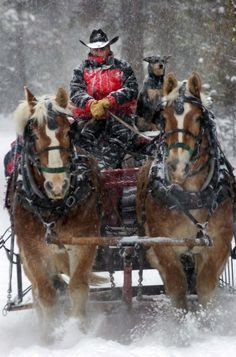 Sleigh Ride. I love the dog and the driver almost as much as the horses!
