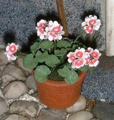 how to: miniature geraniums