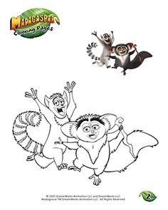 86 beste afbeeldingen ringstaartmaki s dieren apen