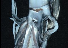 The Kraken is real. And now we have the scientific proof. The giant squid (Architeuthis) has been caught on film thanks to oceanographer and inventor Edith Widder. She came up with the clever idea of luring it in with special lights rather than hunting the colossal creature. Finally, we have images of this illusive giant […]