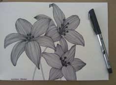Lilly flowers doodle.. #Blackandwhite #Lillyflowers #doodle  #artwork