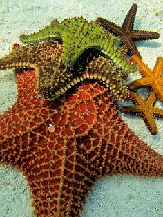 ˚Andros Island Sea Stars