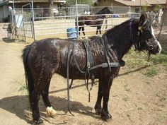 How to Build a Buggy Pony Harness -- this makes it seem so simple... perhaps I could also find one for homemade sheep fuzzies??