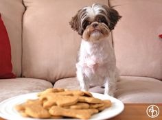 The recipe's basic, but I couldn't resist the look on that adorable dog's face :) | Zoe and Doggie Treats via Aromatic Delights