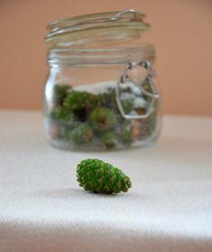 Syrop z zielonych szyszek sosny / Syrup of green pine cones