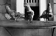 In 1907, German apothecary Julius Neubronner invented an aerial photography technique known as pigeon photography. By affixing a lightweight time-delayed miniature camera to an aluminium breast harness, Neubronner attached his design to homing pigeons who would then be able to capture aerial photographs during their flight.