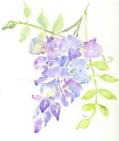 watercolor wisteria drawings pictures - Yahoo Search Results Yahoo Image Search Results