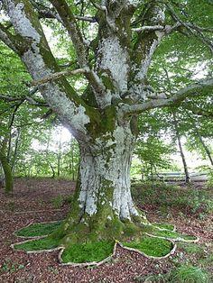 arbre 1 Maïté Milliéroux