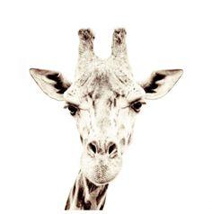 Groovy Magnets tapet - Giraff - woroom.no - Woroom