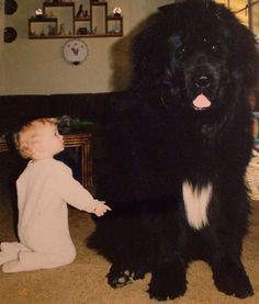 cute-babies-and-their-big-dogs-04