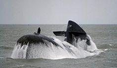De Walrus die boven water komt.