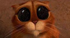 Puss In Boots kitten eyes.
