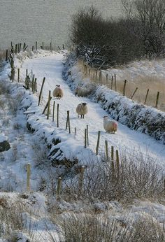 #sheep farm wool,#sheep farm layout,sheep farm homesteads #running #swimming #workouts #cooking #recipe