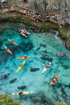 Three Sisters Spring in Crystal River. Swim with manatees at this beautiful florida natural springs. Great for a family day out or vacation stop.