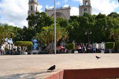 Inquilinas por siempre de nuestra Plaza Grande.