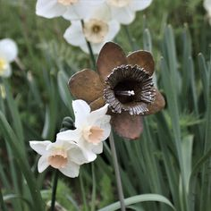 Yellow patinated sterling silver Daffodil flower handcrafted by Danniella Jayne Wilde