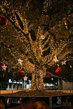 This magical wonderland reminds me of downtown Ocala FL. The firefighters lavishly decorate the trees with massive lights. A sight to behold! Xmas Lights, Holiday Lights, Fairy Lights, Noel Christmas, Winter Christmas, Tree Lighting, Outdoor Christmas Decorations, Christmas Lights Outdoor Trees, Christmas Pictures