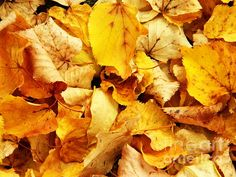 Falling In Love by Andrea Anderegg #fall #yellow #homedecor #love #art #artcollector #gallery