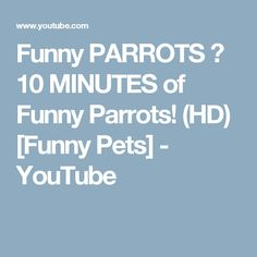 Funny PARROTS ★ 10 MINUTES of Funny Parrots! (HD) [Funny Pets] - YouTube