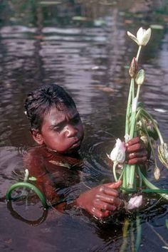 A boy collects waterlily stems in a billabong at Barunga; the stems and bulbs can be eaten. Aboriginal Culture, Aboriginal People, Aboriginal Art, Aboriginal Children, Famous Philosophers, Bird People, Theory Of Evolution, Travel Around Europe, Out Of Africa