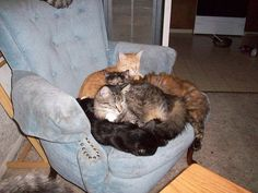 Cat on a Chair by AlishaV, via Flickr
