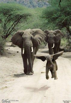 Real life Dumbo : ) !