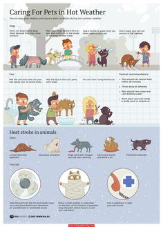 Caring For Pets In Hot Weather Infographic #pets #pet
