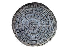 Coupe transversale de tronc d'arbre — Image #52330669