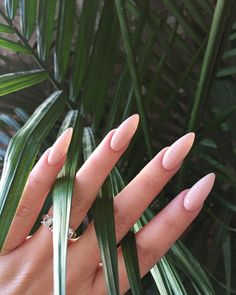 MONDAY MANI VIBES LIKE GETTIN MONEYYYY @fgboss TOUCHIN PALMS IN #FLOSSGLOSS SANDY PINKY BEIGE PASTEL 'DINGE' SHOP $8 LINK IN BIO + @spring (FREE SHIPPING!) ✨