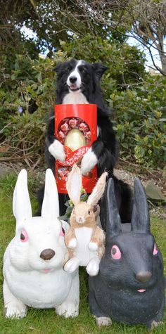 """""""Connie..I'll share my picture with the Bunnies but I'm not sharing my Easter Egg...OK..."""" New in the life of Asha"""
