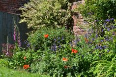 The Rose of Sharon in the middle now gone - this bed is full of peonies now - new photo needed!