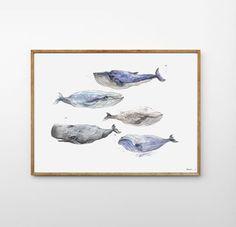 Studium wielorybów (498759) od Pracownia Uroczysko - MyBa...