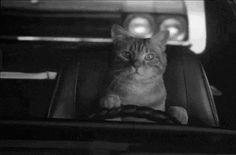 Lightshot — screenshot tool for Mac & Win Animals And Pets, Funny Animals, Cute Animals, Mac, Dog Car, Original Song, Memes, Cats And Kittens, Tela