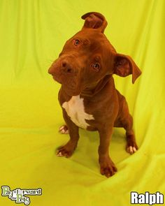 Ralph Terrier Mix • Young • Male • Medium Summit County Animal Control Department Akron, OH. OH Dogs are $90.00 and include adoption fees, vaccination, & flea treatment. Hours: Office open 7:30AM-4PM, Mon-Fri. Closed Sat, Sun, & holidays. Animal Control is open 10AM-5PM on Mon, Tues, Thurs & Fri & 10AM-7PM on Weds & 10AM-3PM on Sat. Closed on Sundays and holidays. Call (330)643-2845 for more info.