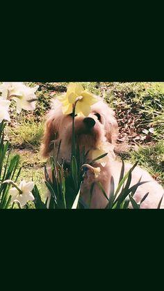 Bailey Horses, Animals, Animales, Animaux, Animal, Animais, Horse