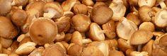 Hiver : les aliments qui boostent notre système immunitaire